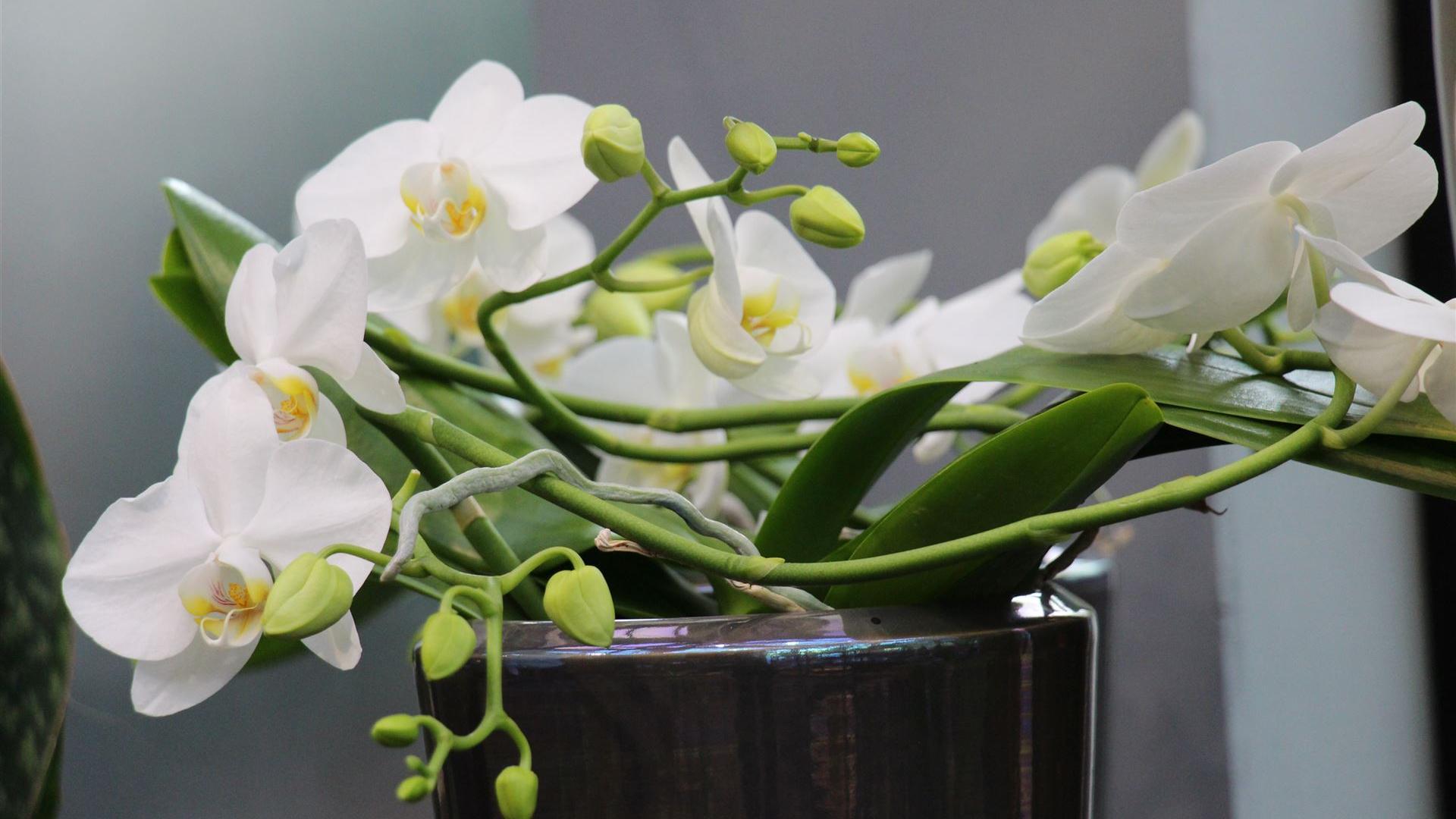 Pflanzen für innen & außen